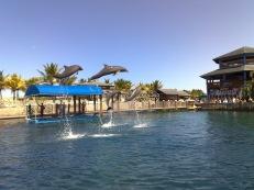 Delfin Springen